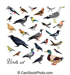 Bundle of city and wild forest birds drawn in modern...