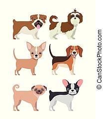 bundle of dog breeds group