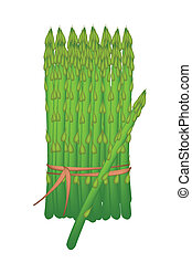 Bundle of Fresh Green Asparagus on White Background