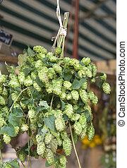 bundle of fresh hops