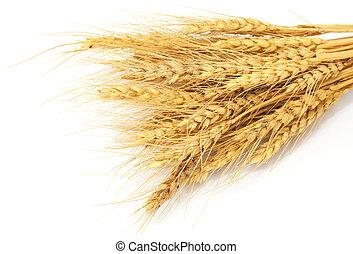 Bundle of Wheat isolated on white
