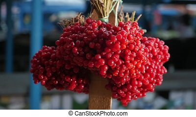 Bundles of fresh red viburnum fixed to a pole in a market...