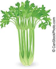 bundtet af, celery, illustration