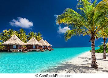 bungalows, encima, árboles de palma, agua, isla, playa tropical, asombroso