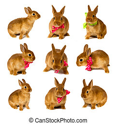 bunnies - little rabbits isolated on white