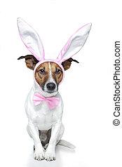 bunny dog easter
