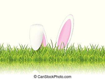 bunny easter, orelhas, em, capim
