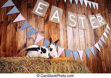 bunny easter - Two fluffy easter bunny sitting on a hay...