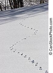 bunny footprint