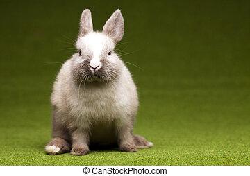 Bunny - Little bunny, Easter
