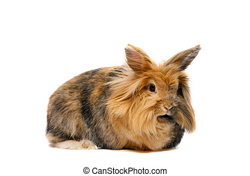 Bunny on the white background
