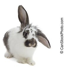 bunny on white background isolated