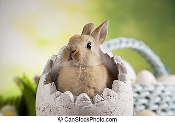 Bunny, rabbit and easter eggs