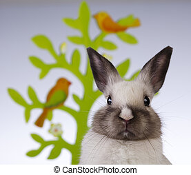 Bunny, rabbit and white background