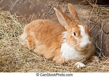 Bunny, rabbit  - Bunny, rabbit
