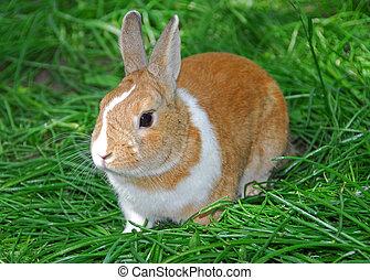 Bunny rabbit on green grass
