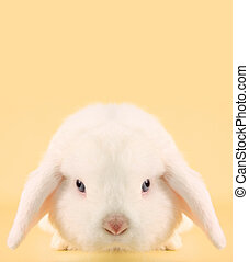 Bunny rabbit  - Evil looking Easter bunny rabbit