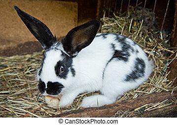 bunny rabbit - detail of bunny rabbit in the hutch