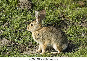 rabbit sitting and waiting