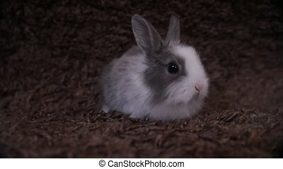 Bunny rabbit sitting in front of gray background