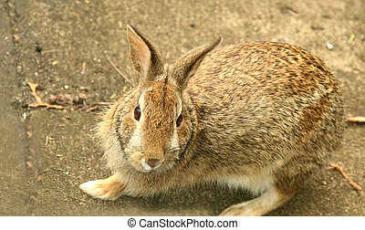 Bunny rabbit - Pretty bunny rabbit