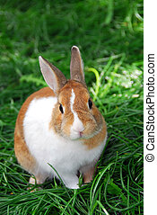 Bunny rabbit - Cute bunny rabbit sitting outside in green...