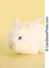 Bunny rabbit - Cute bunny rabbit on a pastel yellow...