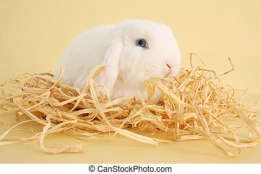 Bunny rabbit - White bunny rabbit surrounded by straw. Also...