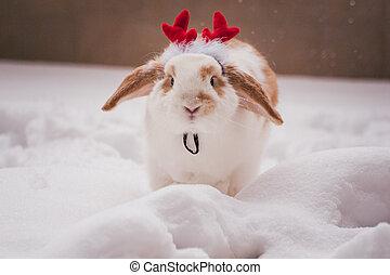 rabbit wearing red deer horns costume