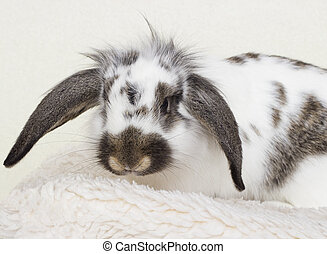 bunny sitting on a white bedspread