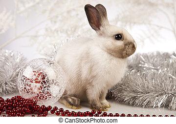 Bunny with Christmas