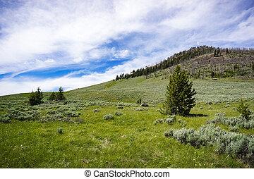 Bunsen Peak trail landscape, Yellowstone National Park, Wyoming
