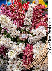 bunte, dekoration, floristic, schoenheit, tropische blumen