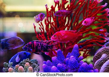 welt fische salzwasser aquarium bunte bunte collage
