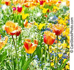 bunte, fruehjahr, tulips., karte, begriff
