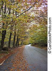bunte, herbstbäume, auf, a, wicklung, ländlicher weg