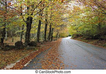 bunte, land, bäume, herbst, biegende straße