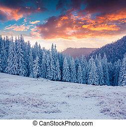 bunte, landschaftsbild, an, der, winter, sonnenaufgang, in, der, berg, wald