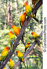 bunte, papageien, in, safari, welt, bangkok, thailand