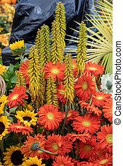 bunte, schoenheit, tropische blumen, floristic, dekoration