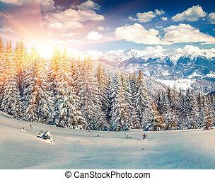 bunte, winter, sonnenaufgang, in, der, berg, forest.