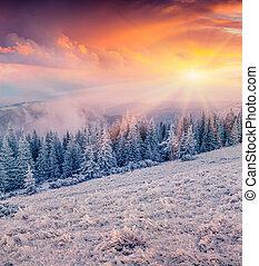 bunte, winter, sonnenaufgang, in, der, berg, wald