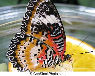 bunter Schmetterling auf einer Zitrone