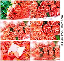 buquet, cor-de-rosa, jogo, rosas