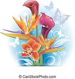 buquet, de, strelitzia, e, calla, flores