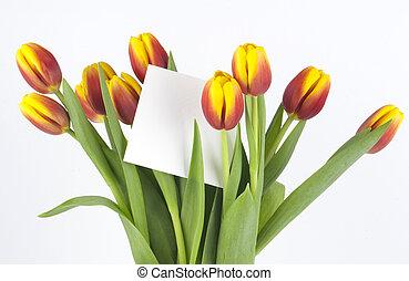 buquet, de, tulips, com, um, cartão