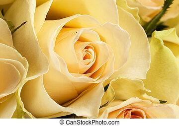 buquet, fim, rosas, cima, amarela