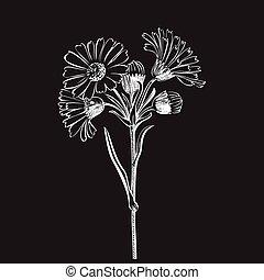 buquet, isolado, mão, fundo, margarida, desenhado, flores...