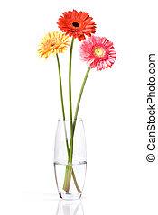 buquet, isolado, vaso, vidro, daisy-gerbera, branca