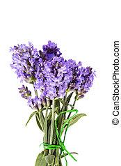 buquet, lavanda, isolado, fundo, violeta, flores brancas